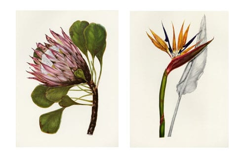 Celebrating Spring with Botanical Art Exhibition