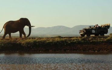 Thanda Safari