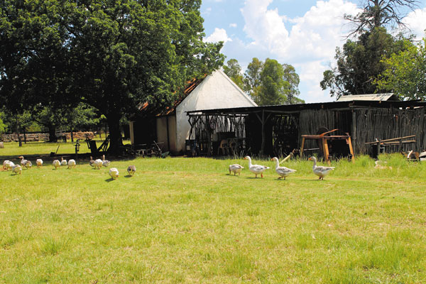 Willem Prinsloo Agricultural Museum