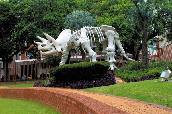 DITSONG National Museum of Natural History fossils things to do in Gauteng South Africa for Christmas family outings